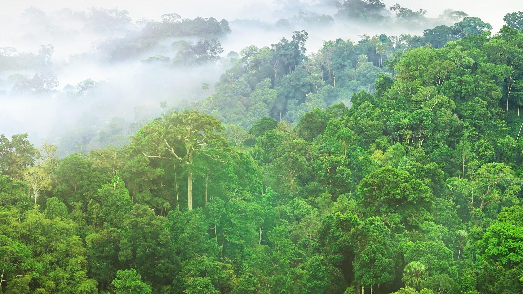 Neue Webinarreihe des Karlsruher Klimafonds